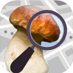 application champignouf