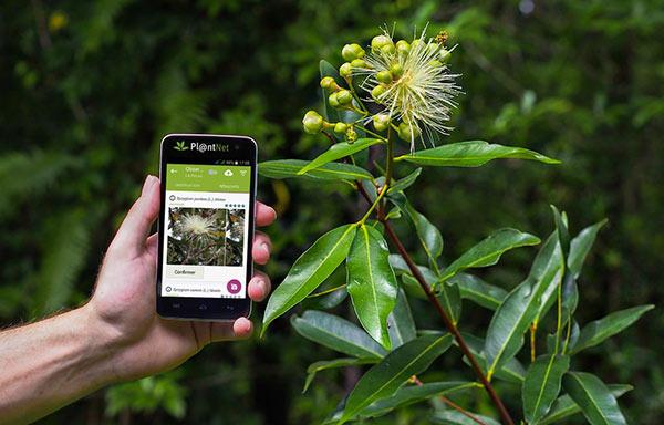 application plantnet pour reconnaitre les plantes en randonnée