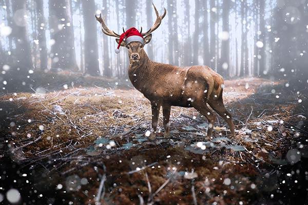 le cerf de Noel