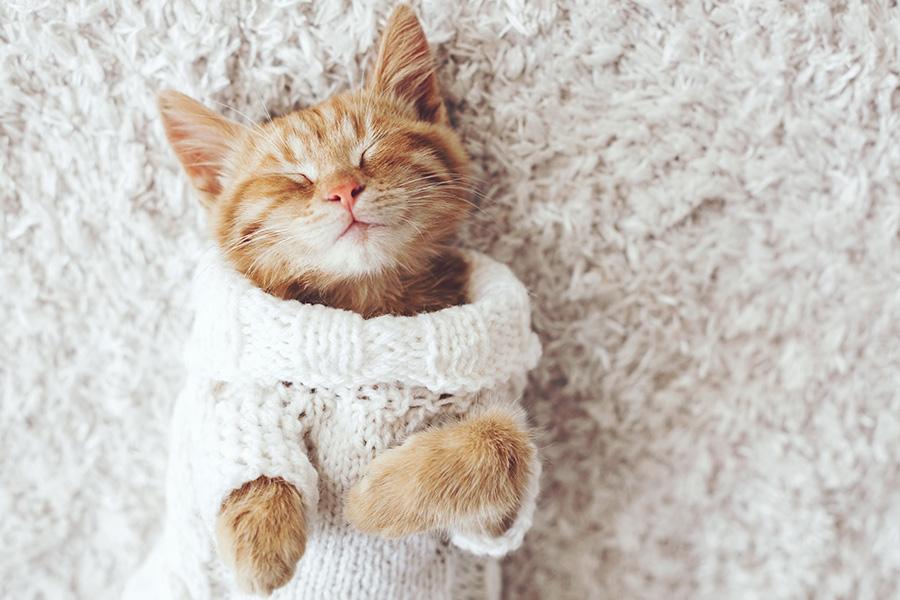 chat qui dort en hiver