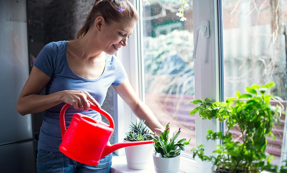 dépolluer l'air intérieur avec des plantes