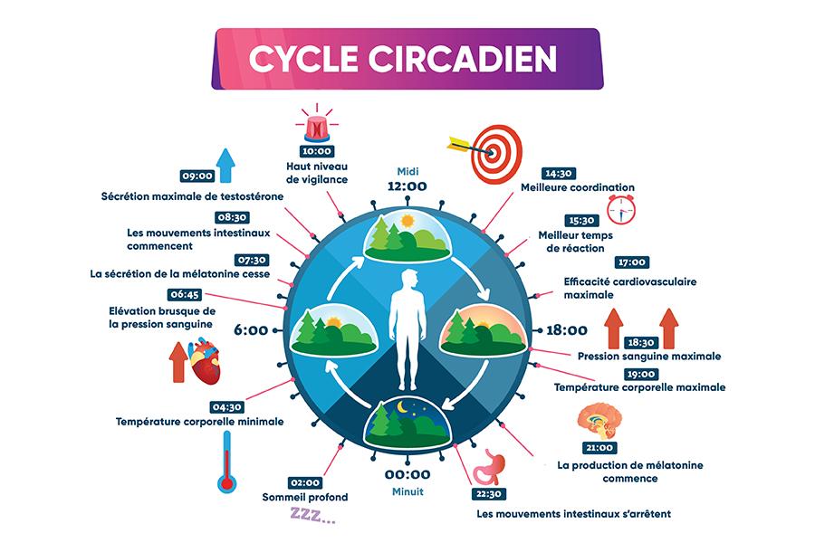 cycle-circadien-du-sommeil-ubaldi